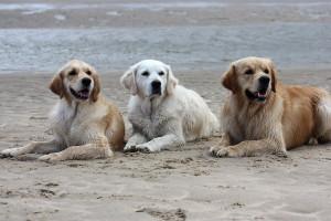 Jula mit ihren Kindern Smilla und Mika