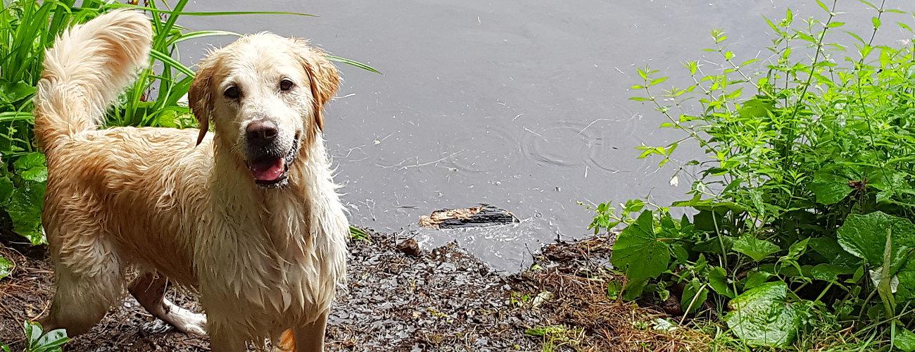 Schwimmen mit Mira