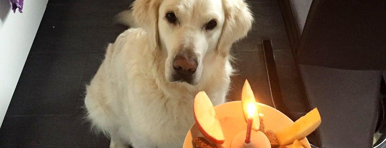 Geburtstagsbilder von Lilli