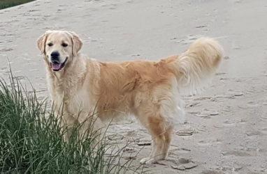Bailey war in Dänemark
