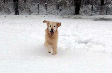 Hugo im Winterwonderland