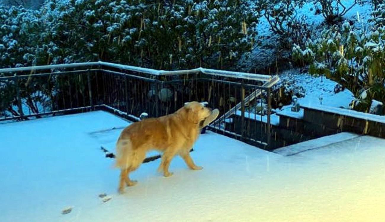 Marley im Schnee