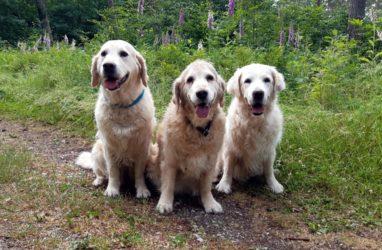 Unser Trio