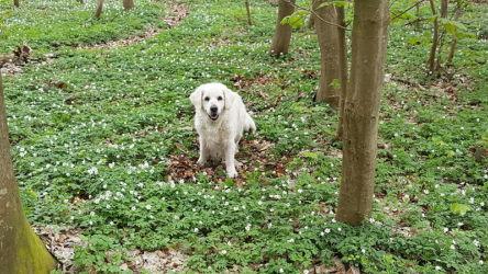 im Wald mit Ines, Wilko und Bailey
