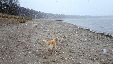 Schnee und Temperaturabfall auf 1,5 Grad *bibber*